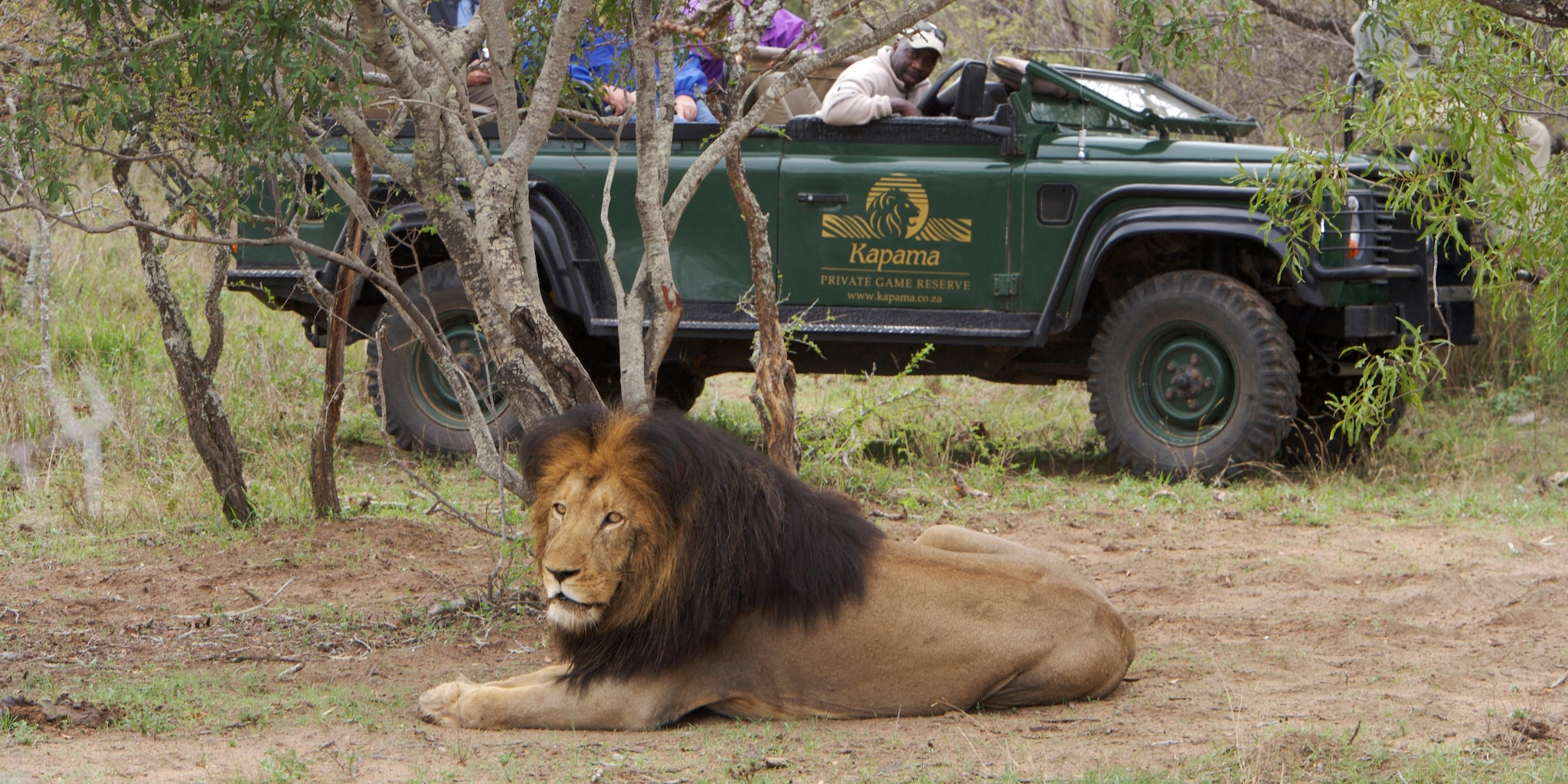 Passengers in a Kapama Reserve safari jeep observe a lion during their Big Game drive