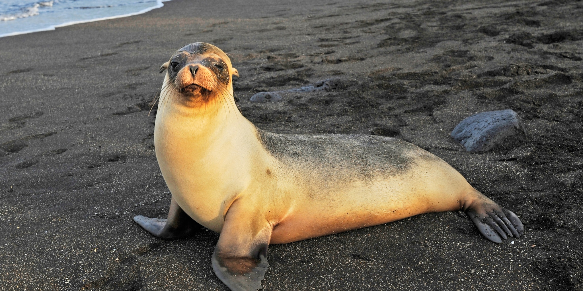 A sea lion rests on the shore