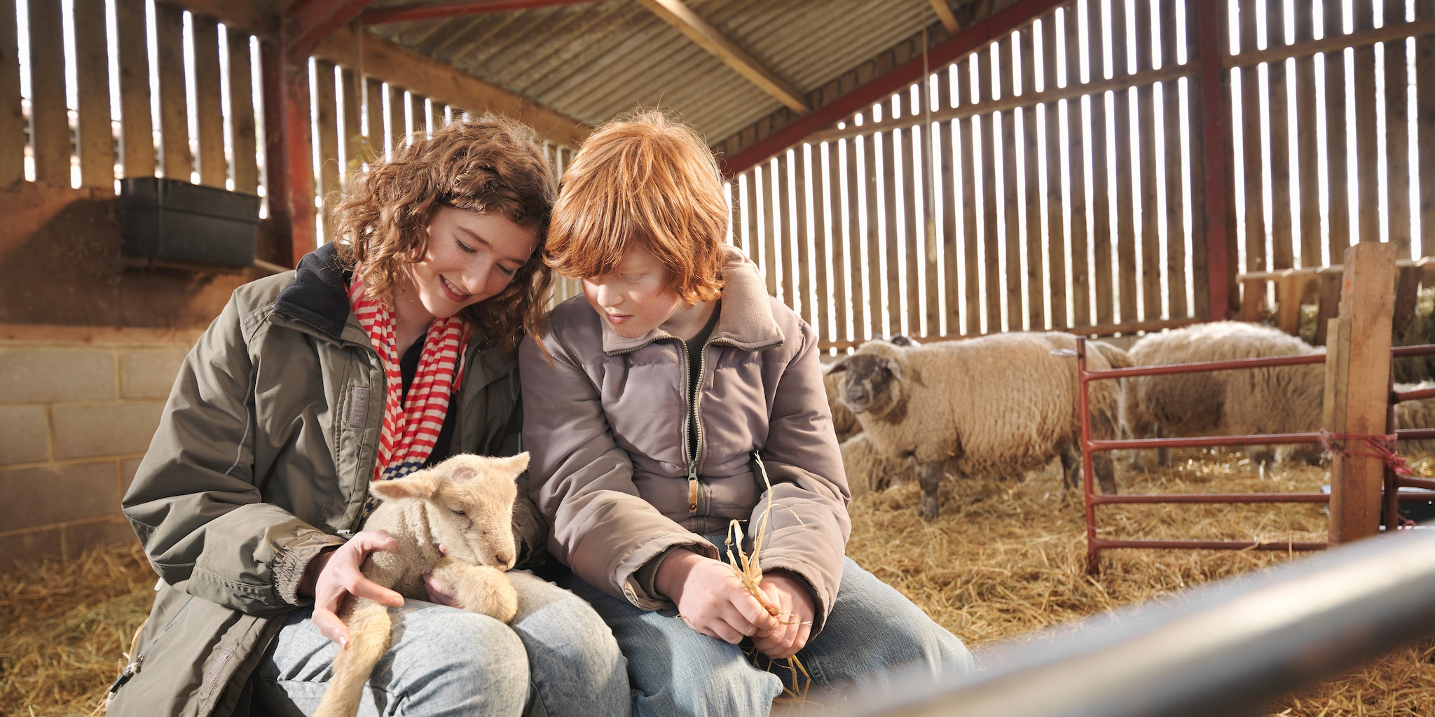 A boy and girl sit in a barn, playing with a lamb