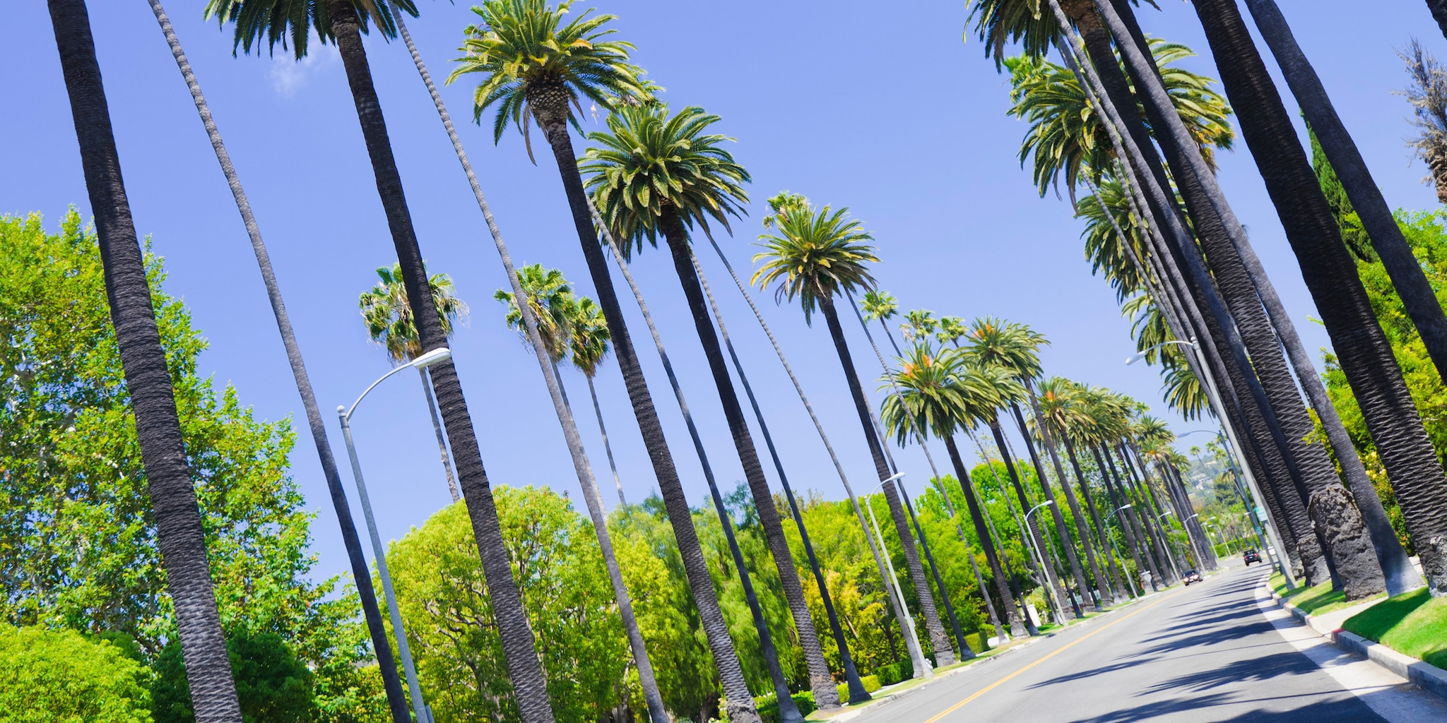 A palm tree-lined street in Los Angeles