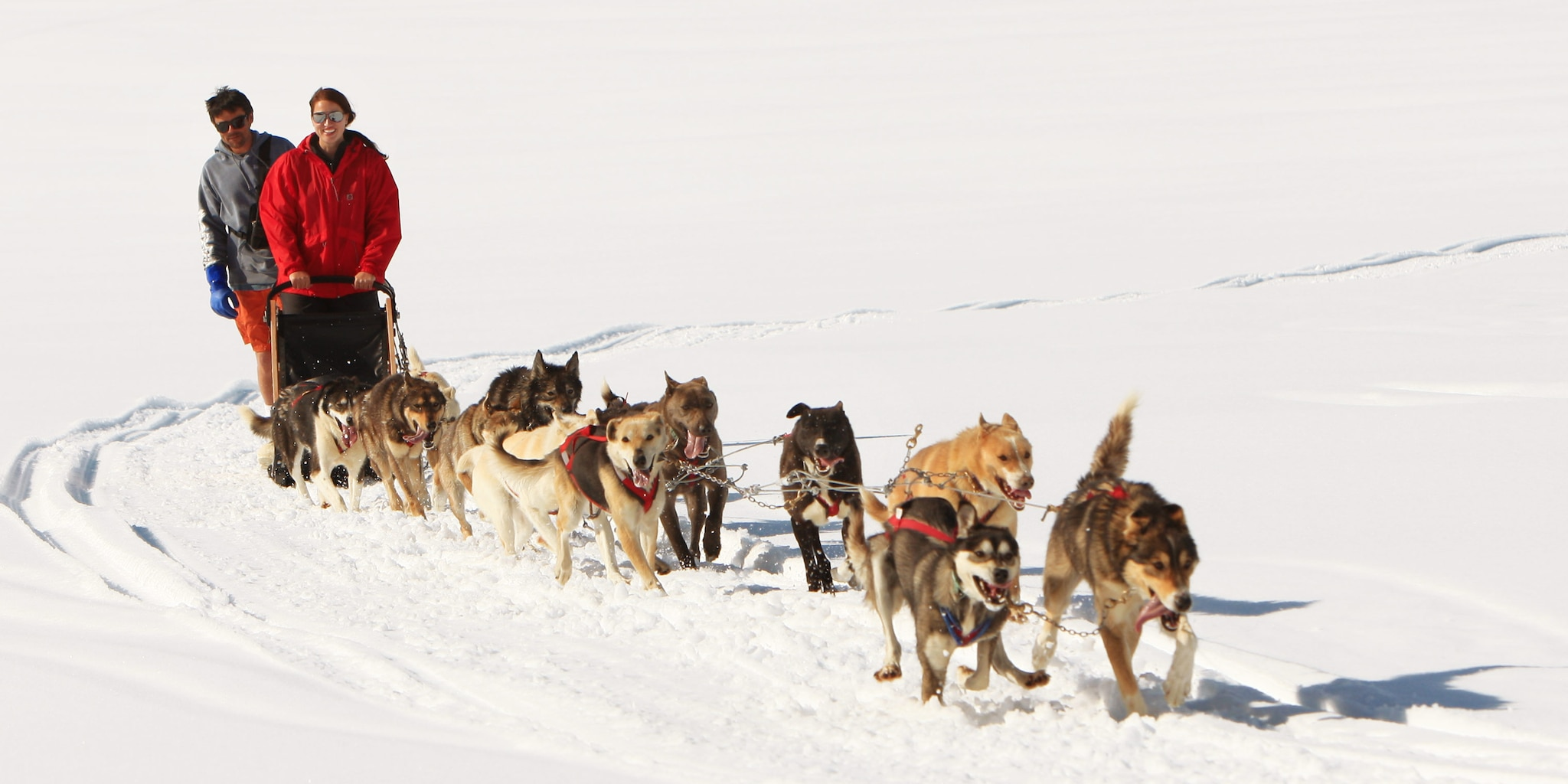 An Iditarod dog sled team dashes through the snow