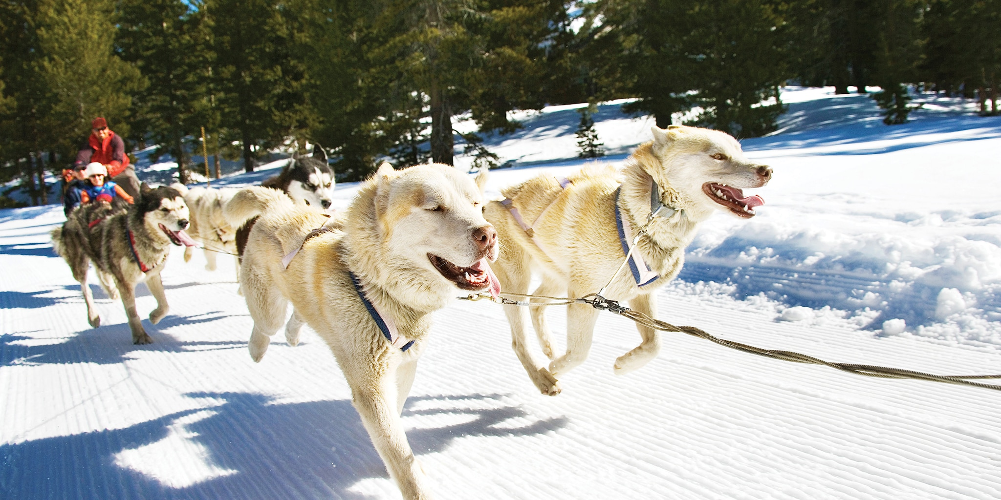 Several people take the Iditarod Sled Dog Tour