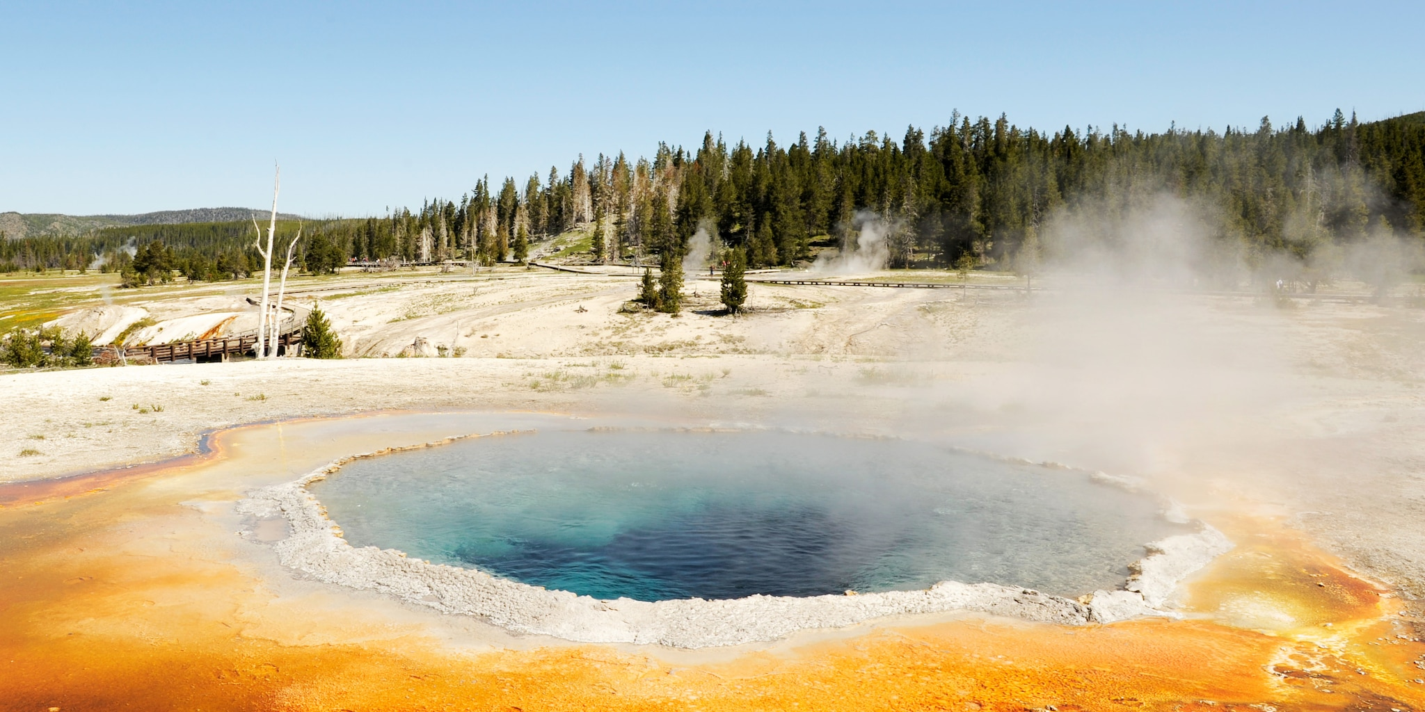 A steaming geyser with the Yellowstone forest in the background